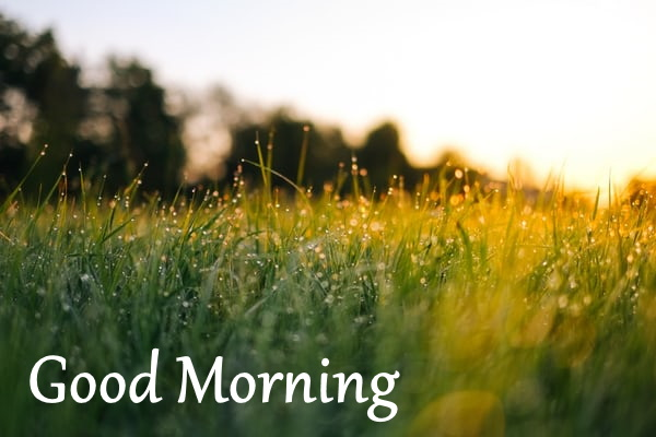 beautiful morning images download