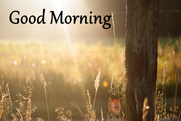 good morning images hd free download for whatsapp 2020