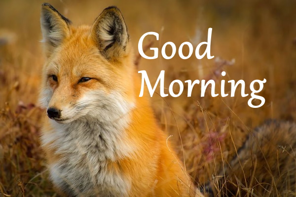 good morning nature images free download hd