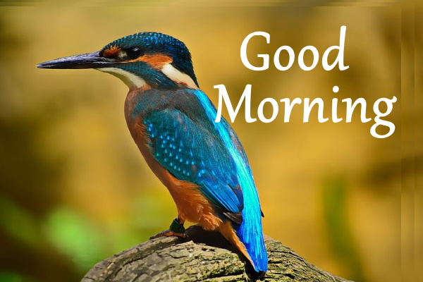 good morning nature quotes hd