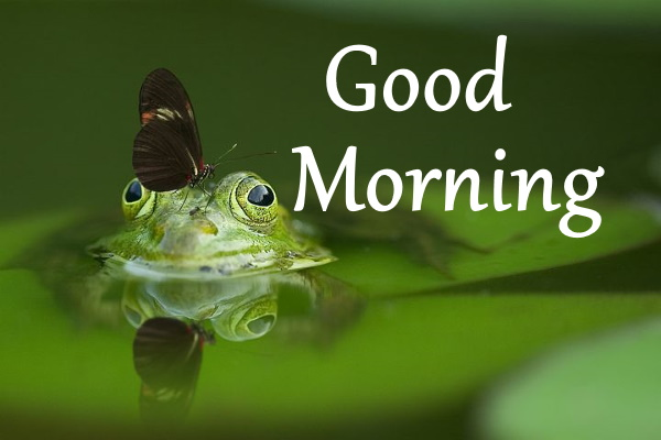 good morning photo wallpapers with nature download hd