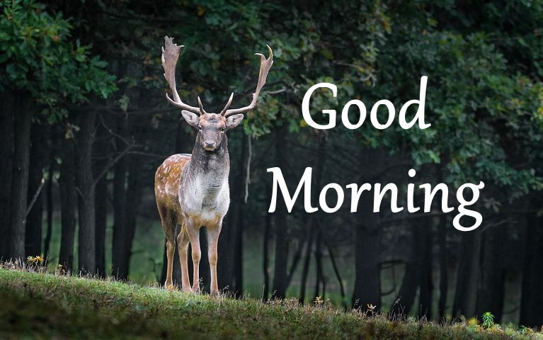 good morning photos images wallpapers with nature download hd