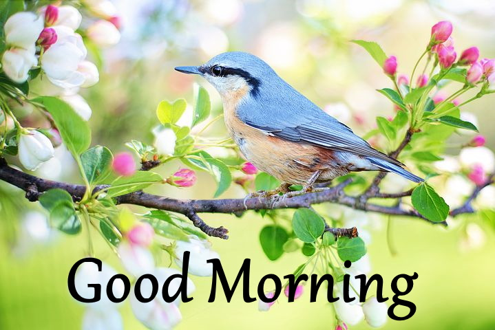 good morning pictures images wallpapers with nature download hd
