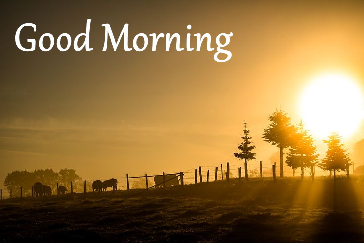 beautiful morning images pics wallpaper