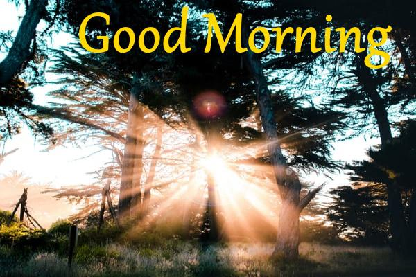 Good Morning Images Wallpaper Picture