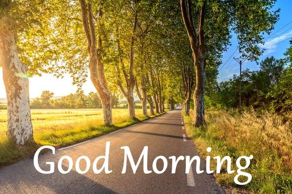 Good Morning Images Wallpaper Picture download for whatsapp