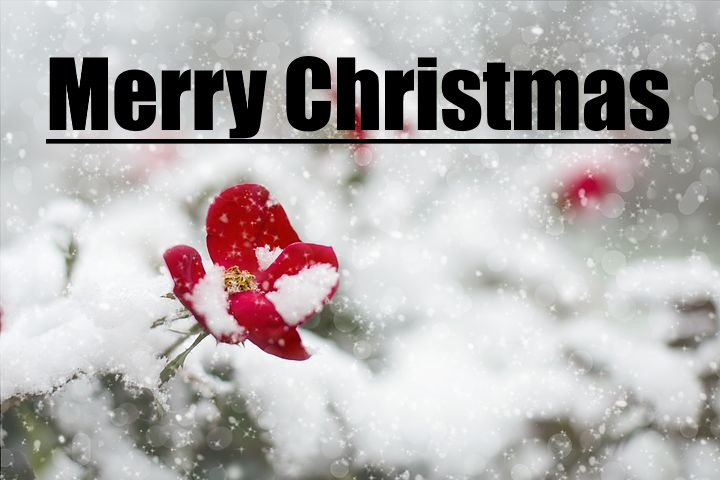 merry christmas images full hd
